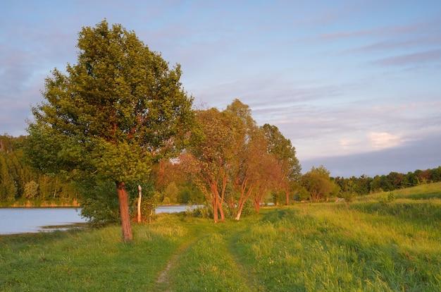 Вечерний летний пейзаж. дорога у пруда и деревьев