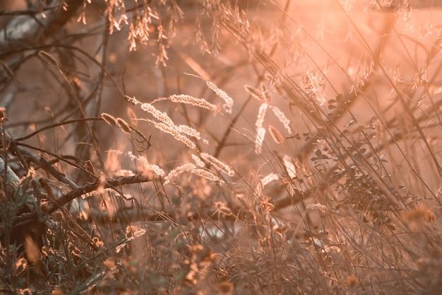 Вечерний летний луг и вспышки солнечного света. красивый фон природы боке.