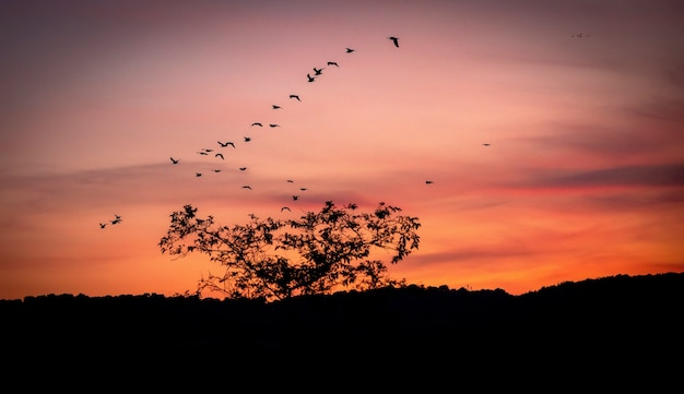 チャーマスグレートブリテンの丘の頂上からイギリスの田舎の風景の上に木のシルエットで夕焼け