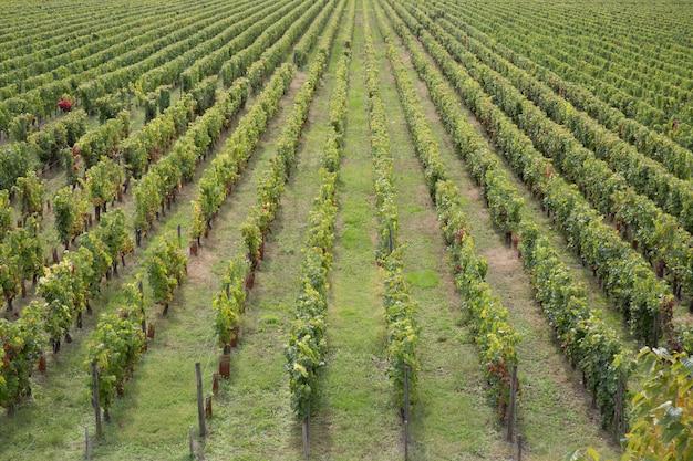 Вечерний вид на виноградники в бордо, франция