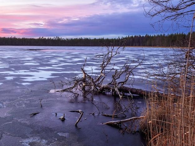 Вечерний зимний морозный пейзаж с замороженным упавшим деревом в озере.