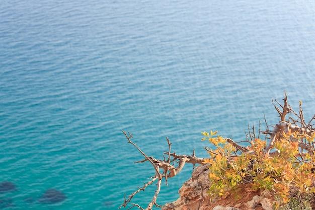 小さな曲がった木が正面にあるイブニングスの海岸と海の水面の眺め