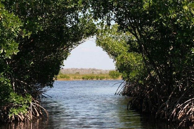 Everglades mangrovie torbiere