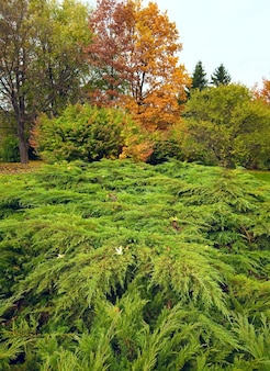 가을 도시 공원의 상록수 덤불과 다채로운 나무