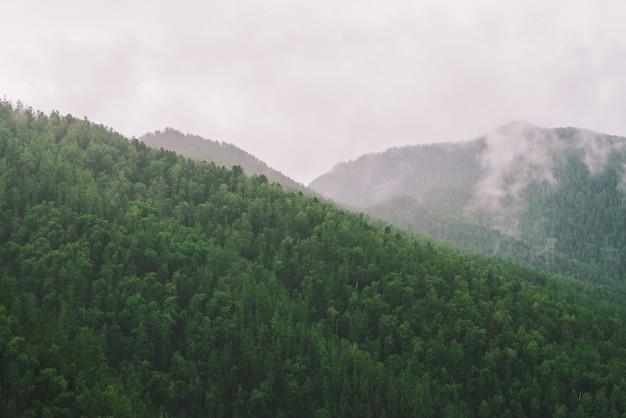 Вечнозеленый лесной покров в гористых местностях в утреннем тумане. мистическая дымка среди холмов. атмосферный туманный горный ландшафт величественной природы.