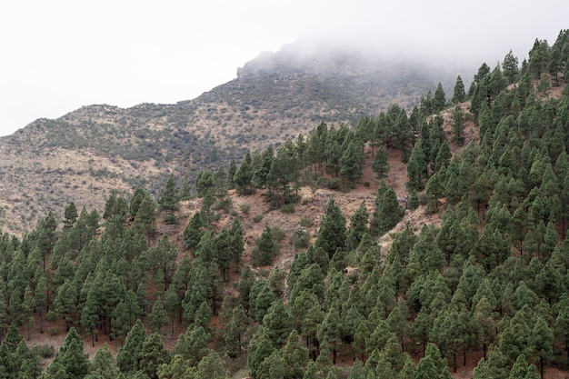 Evergreen forest growing on mountain coast