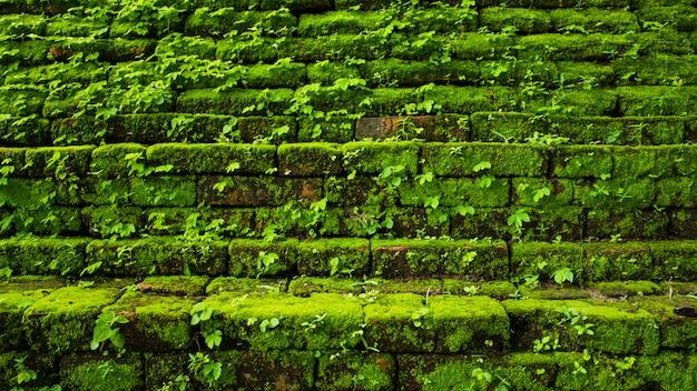 Вечнозеленый зеленый мох в примитивном лесу, расположенном в национальном парке интанон, чианг май, таиланд