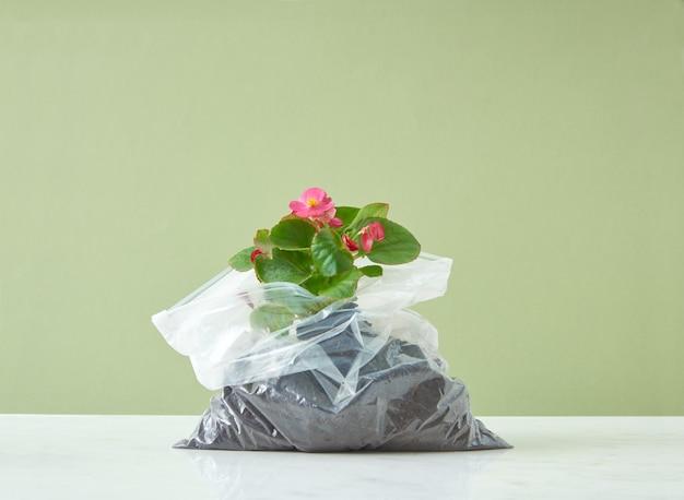 이중톤 배경의 비닐 봉지에 아름다운 꽃이 있는 상록수 화초. 생태 및 환경 개념입니다.