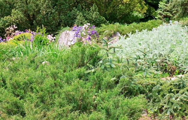 春の公園の常緑植物と色とりどりの花