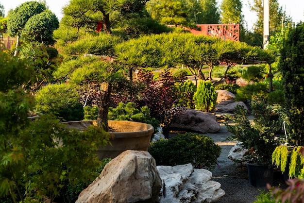 정원 센터의 상록 재배, 조경을위한 욕조의 식물