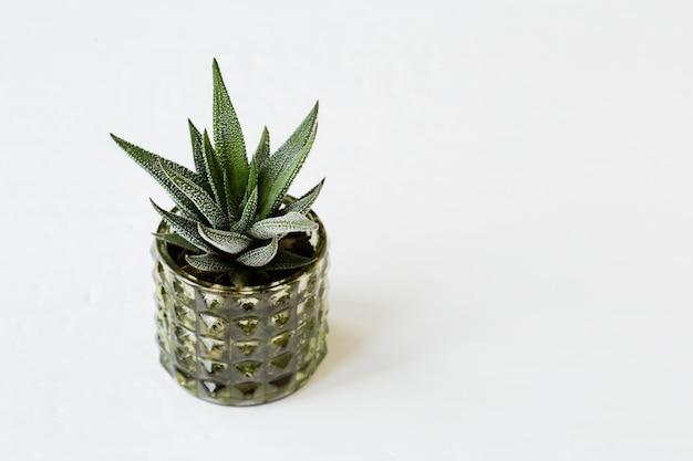 Вечнозеленая сочная хавортия в зеленом горшке на белом столе. домашнее растение алоэ в стеклянном небольшом вазоне. минимальный натюрморт.