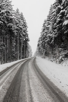 Evergreen winter forest and road