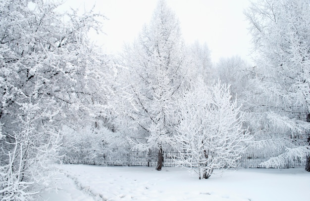 Everything covered with snow. fabulous christmas