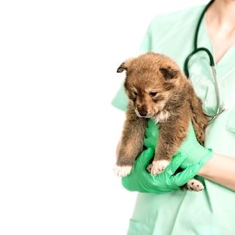 純血種の犬、ペット、雑種の獣医クリニックでの検査。ベテレナーは小さなペットを腕に抱えています。コピースペース