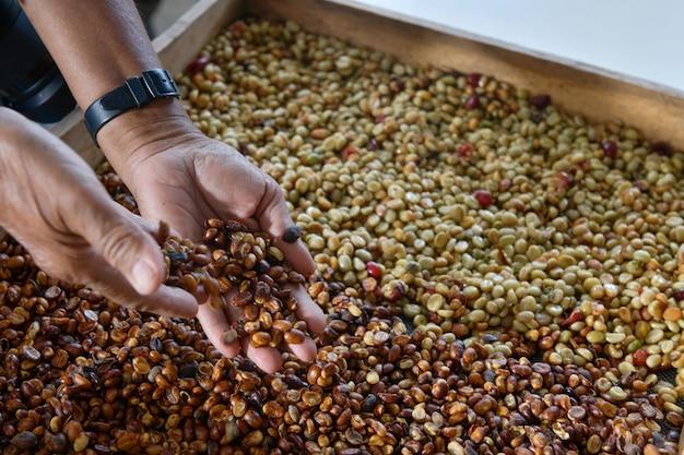 Проверка качества кофейных зерен, которые были высушены и обработаны в процессе отбеливания.