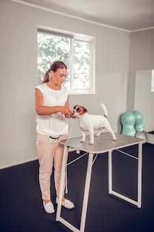 小さな犬を調べる。タブレットの上に立っている小さなかわいい犬を調べるプロの経験豊富な獣医
