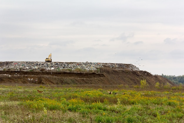 Excavator at a garbage dump and stray dogs on a green meadow