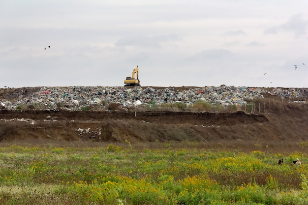 Excavator on the garbage dump and stray dogs on green meadow