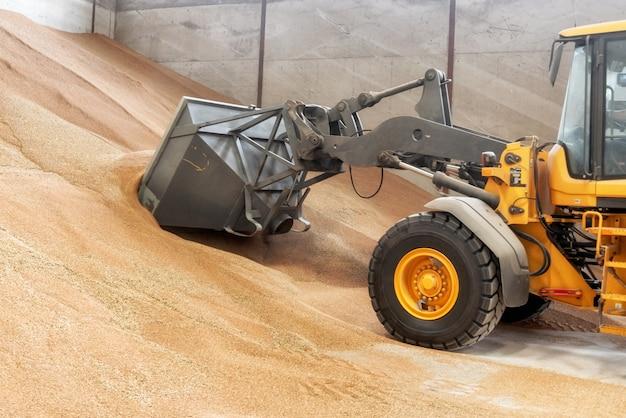 Excavator loader bucket loading grain, close up.