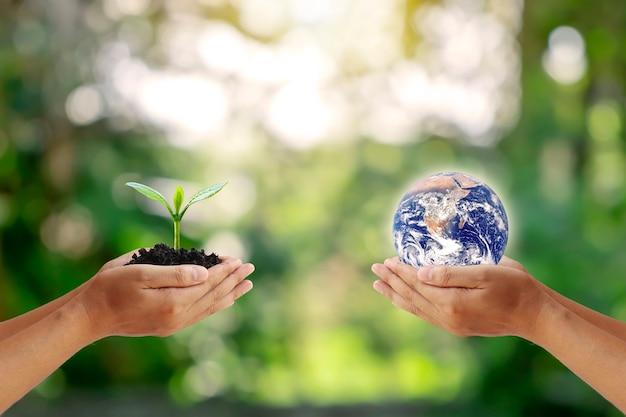 인간의 손에있는 행성을 인간의 손에있는 작은 나무와 교환