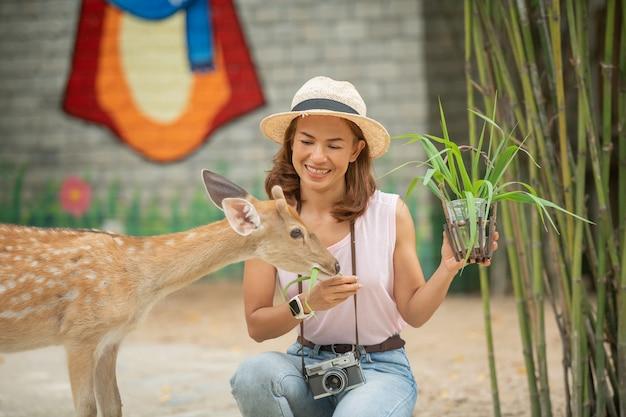 Захватывающий опыт. женщина наблюдает за едой и гладит молодого пятнистого оленя