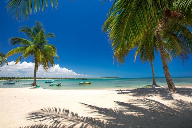 야자수와 바다 전망이있는 이국적인 해변 풍경