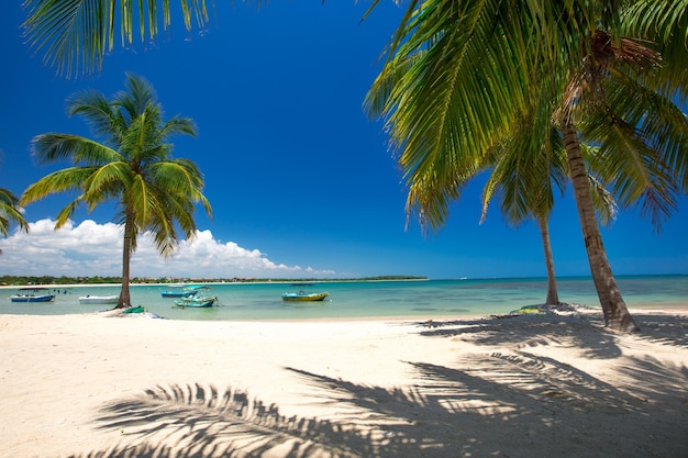Exotic beach landscape with palm trees and sea views