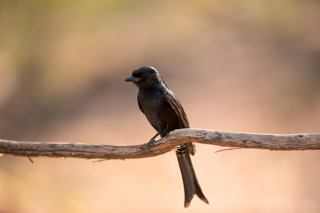 Exotic bird on a branch of wood