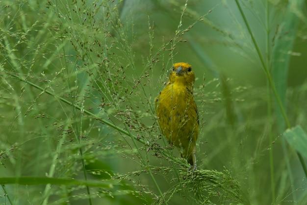 Экзотическая птица на ветке дерева