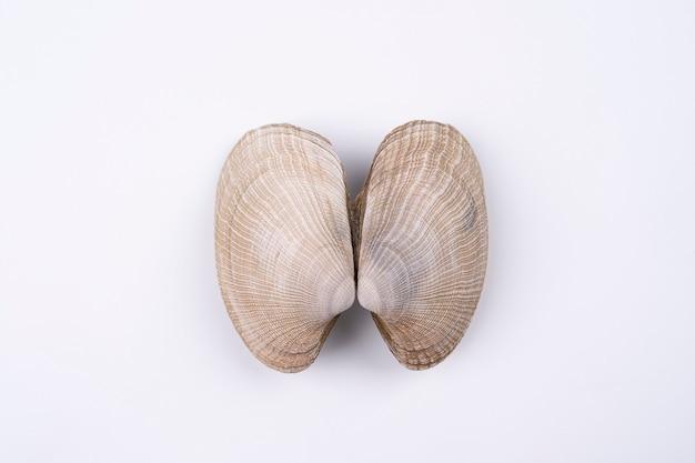 Экзотические двойные морские раковины, изолированные на белом фоне. понятие о легких. вид сверху макросъемки
