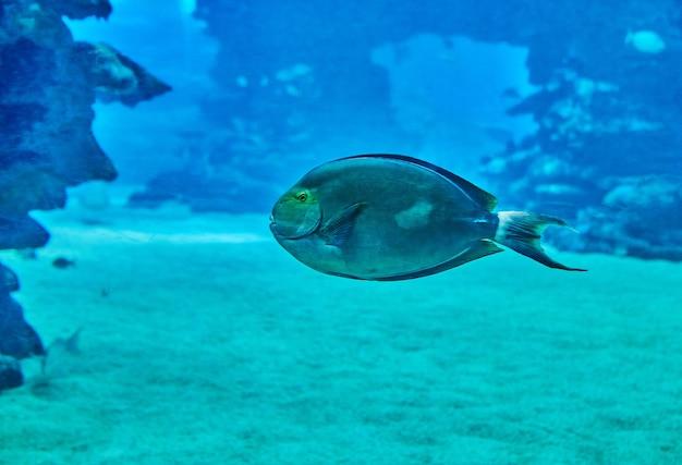 산호 사이를 헤엄치는 홍해 수족관의 이국적인 물고기