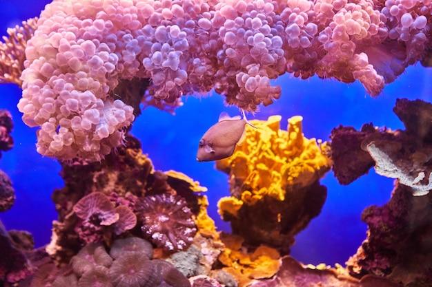 홍해 수족관의 이국적인 물고기는 어둠 속에서 빛나는 산호 사이를 헤엄칩니다.
