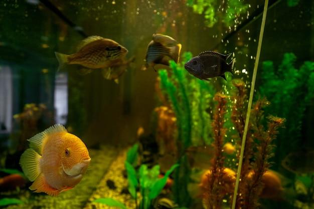 Экзотические рыбки плавают в воде среди растений за стеклом аквариума