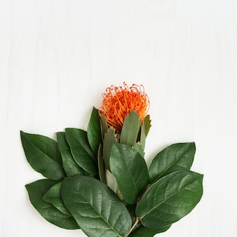 Exotic flower leucospermum with orange petals and branches with green leaves on light holiday concept with natural flower. top view and copy space.