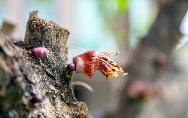 Экзотический цветок на дереве в природе концепции