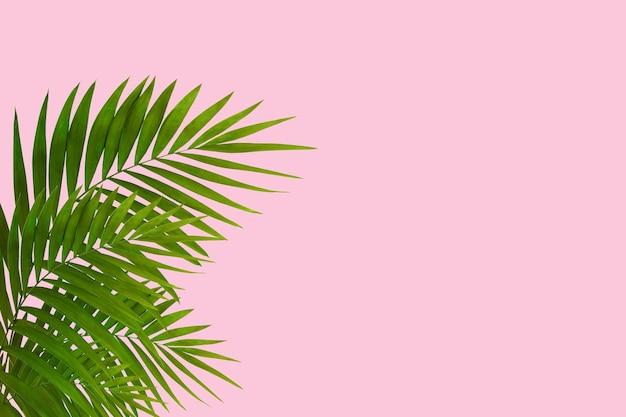 エキゾチックな緑の熱帯ヤシの葉はピンクの背景に分離されました。招待状、チラシのデザイン。ポスター、表紙、テキスト用のコピースペース付きの壁紙の抽象的なデザインテンプレート。