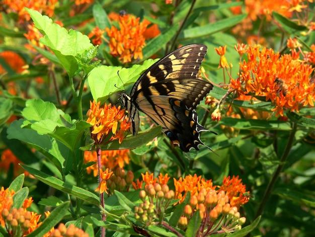 エキゾチックな昆虫と夏の花