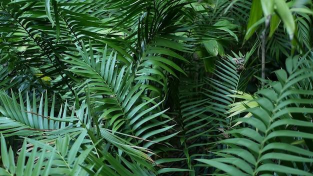 エキゾチックなジャングルの熱帯雨林の熱帯の雰囲気。シダ、ヤシ、新鮮なジューシーな葉、アマゾンの密生した深い森。濃い自然の緑豊かな葉。常緑の生態系。楽園の美学