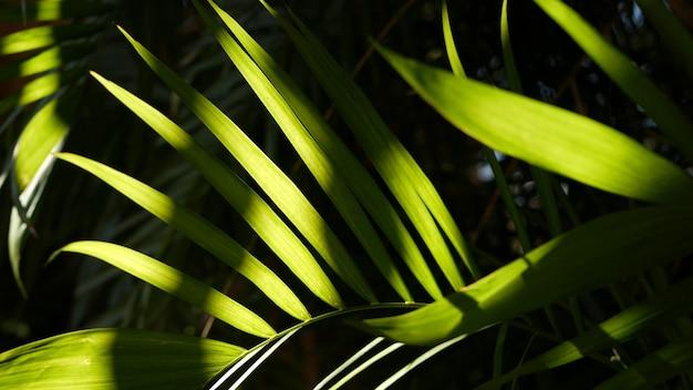 エキゾチックなジャングルの熱帯雨林の熱帯の雰囲気。アマゾンの森や庭に新鮮なジューシーな葉を手のひらで。濃い自然の緑豊かな葉を対比してください。常緑の生態系。楽園の美的背景
