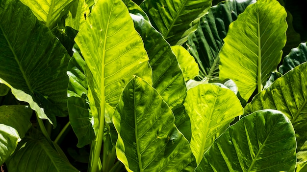 Exotic leaves in the sun outdoors