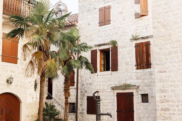 旧市街の古代の建物を背景にしたエキゾチックなヤシの木。