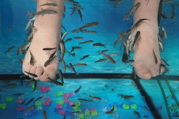 물고기 garra rufa로 다리의 이국적인 필링