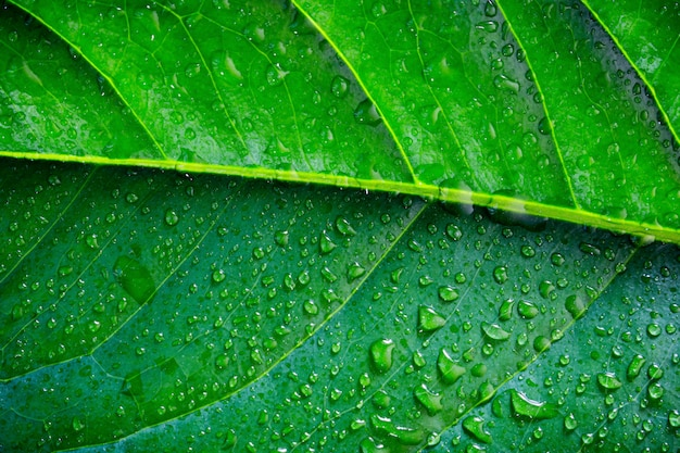 Exotic plant leaf with water drops close-up