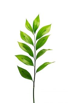 Листья экзотических растений изолированы
