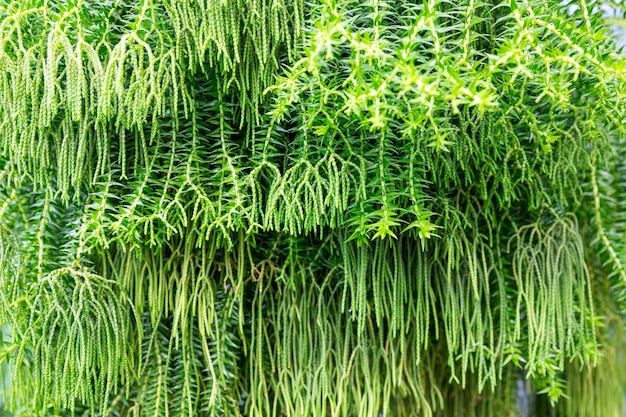 Exotic plants background in botanical garden greenhouse.
