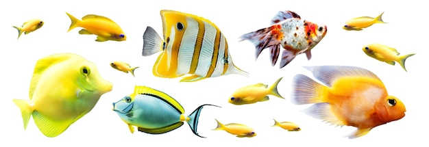 Exotic reef fish isolated on white