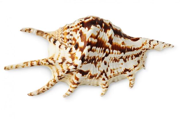 Экзотические морские раковины изолированные вид сверху