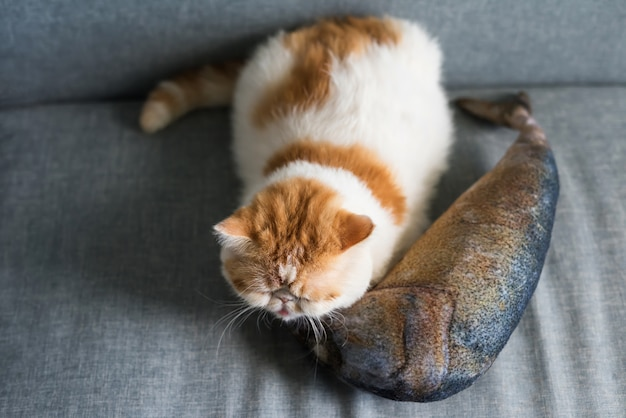 Exotic shorthair cat sleep on fish pillow