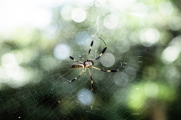 Exotic spider on web closeup