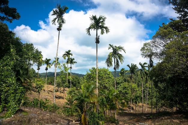 背景の熱帯雨林の山々のエキゾチックな背の高い木